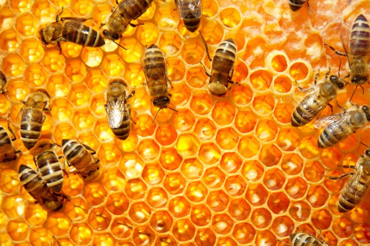 bees_6