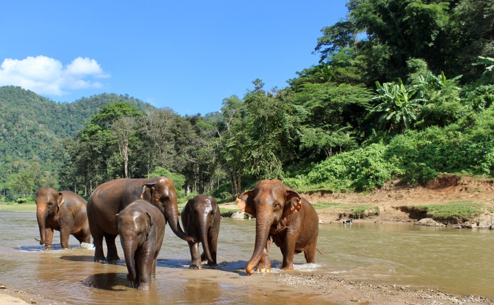 Thailand: Animal Tourism's Progress is Possible With Love and Bananas