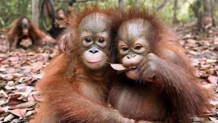 3 Steps To Help Solve The Palm Oil Problem