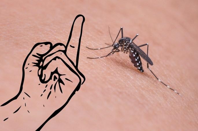 mosquito-FU.jpg
